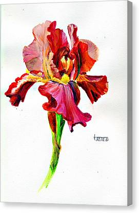 Iris Canvas Print by Jimmie Trotter