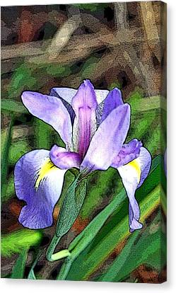 Iris Canvas Print by Rosemary Aubut