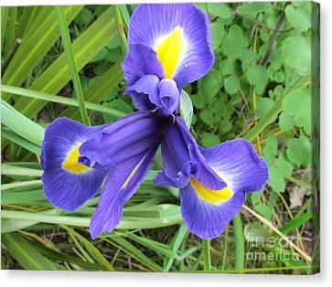 Canvas Print - Irise Flower by Joyce Woodhouse