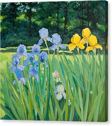 Irises In The Garden Canvas Print by Betty McGlamery