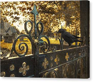 Jackdaw On Church Gates Canvas Print by Amanda Elwell