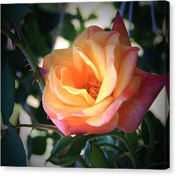 Jacob's Rose Canvas Print by Marna Edwards Flavell