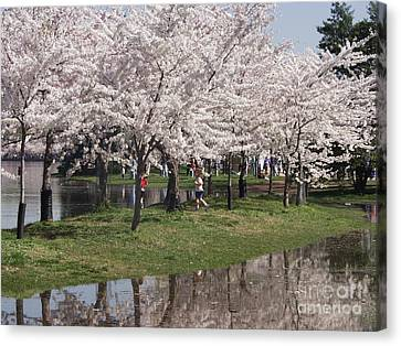Japanese Cherry Blossom Trees Canvas Print by April Sims