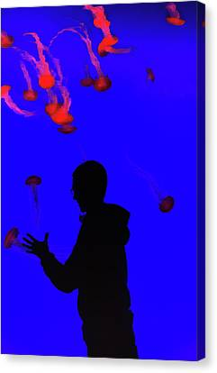 Jellyfish Canvas Print by Martin Newman