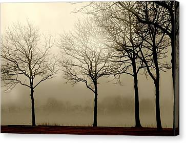 Just A Phase Canvas Print by Diana Angstadt