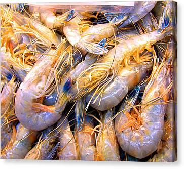 Canvas Print featuring the photograph Just Caught Shrimp by Merton Allen