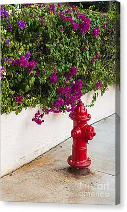 Fire Hydrant Canvas Print - Key West Fire Hydrant by Elena Elisseeva