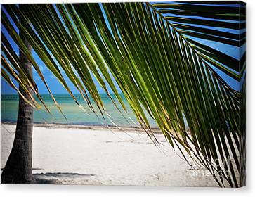Canvas Print featuring the photograph Key West Palm by Kelly Wade