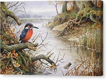 Kingfisher Canvas Print by Carl Donner