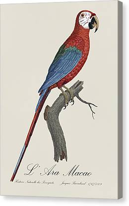 L' Ara Macao / Red And Green Macaw - Restored 19th Century Macaw Illustration By Jacques Barraband Canvas Print by Jose Elias - Sofia Pereira