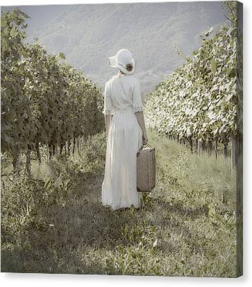Lady In Vineyard Canvas Print by Joana Kruse