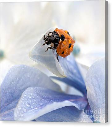 Garden Flowers Canvas Print - Ladybug by Nailia Schwarz