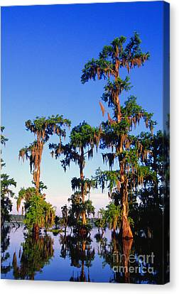 Lake Martin Cypress Swamp Canvas Print by Thomas R Fletcher