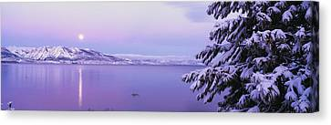 Conifer Canvas Print - Lake Tahoe Ca by Panoramic Images