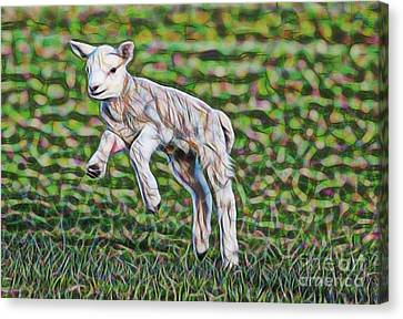 Lamb Canvas Print - Lamb Collection by Marvin Blaine