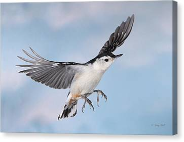 Landing Gear Down Canvas Print by Gerry Sibell