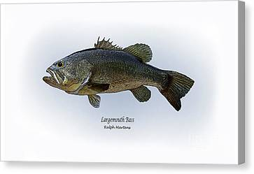 Largemouth Bass Canvas Print by Ralph Martens