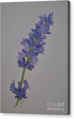 Canvas Print featuring the drawing Lavender by Linda Ferreira