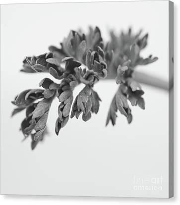Leaf Canvas Print by Gabriela Insuratelu