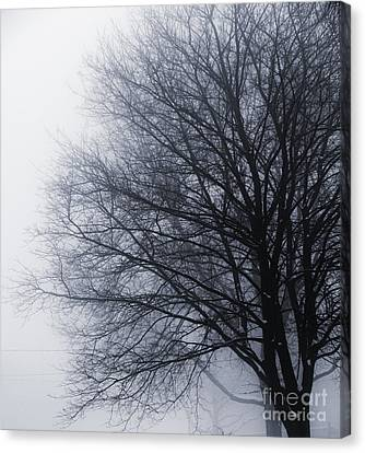 Leafless Tree In Fog Canvas Print by Elena Elisseeva