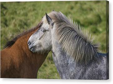 Canvas Print featuring the photograph Lean On Me by Elvira Butler