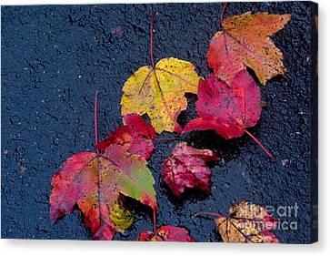 Canvas Print - Leaves by April Bielefeldt