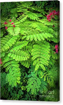 Canvas Print featuring the photograph Leaves by Charuhas Images