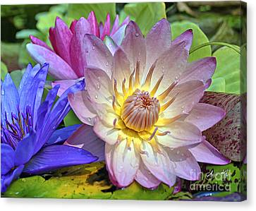 Lilies No. 43 Canvas Print by Anne Klar