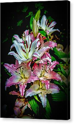 Lilies Of The Falls Canvas Print by John Haldane