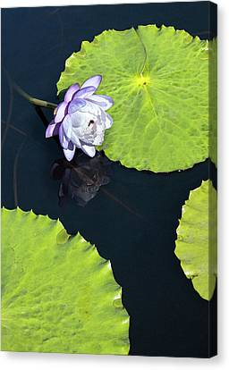 Canvas Print featuring the photograph Lily Love by Suzanne Gaff