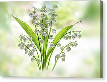 Lily Of The Valley Canvas Print by Jacky Parker