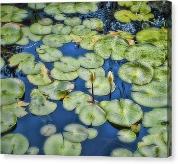 Canvas Print - Lily Pads by Ann Powell