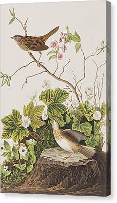 Lincoln Finch Canvas Print by John James Audubon