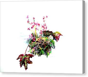 Linda Begonia Canvas Print by Mindy Newman