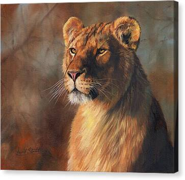 Lioness Portrait Canvas Print by David Stribbling