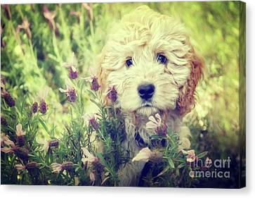 Dog Canvas Print - Little Puppy by Angela Doelling AD DESIGN Photo and PhotoArt