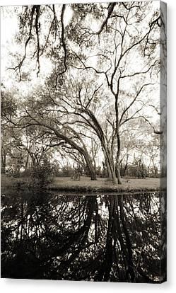 Live Oak Reflections Canvas Print by Dustin K Ryan