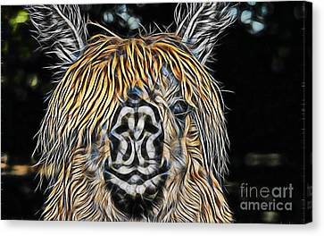 Llama Canvas Print by Marvin Blaine