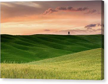 Lone Cypress Canvas Print by Michael Blanchette