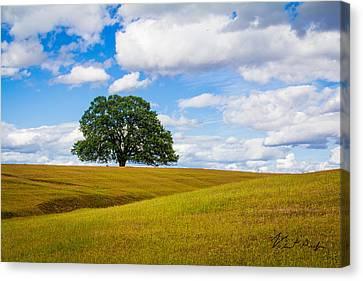 Lone Oak Canvas Print
