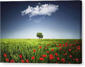 Lone Tree A Poppies Field Canvas Print by Bess Hamiti