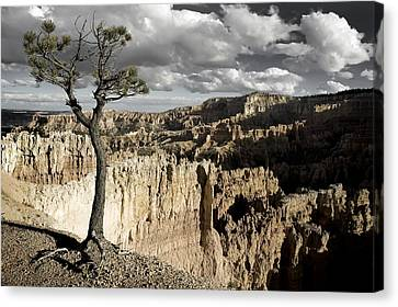 Lone Tree Canyon Canvas Print