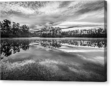 Everglades National Park Canvas Print - Long Pine Bw by Jon Glaser