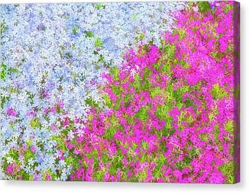 Pink And Purple Phlox Canvas Print by Andrea Kappler