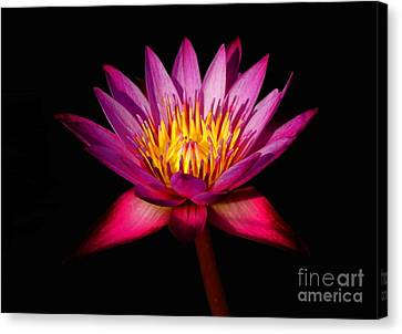 Canvas Print featuring the photograph Lotus by Louise Fahy