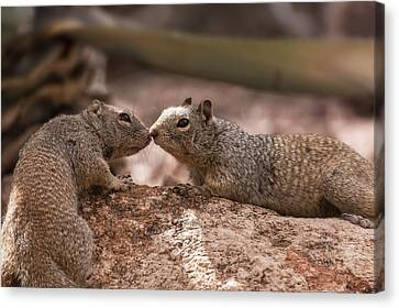 Canvas Print featuring the photograph Love Is In The Air  by Saija Lehtonen