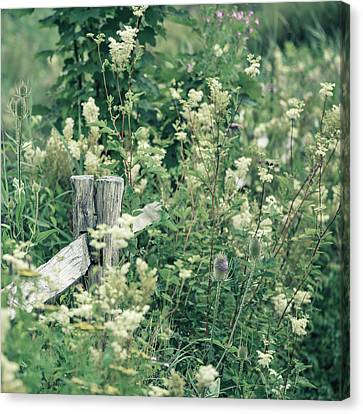 Lovely Summer Landscape With Split Toned Filter For Instagram Lo Canvas Print by Matthew Gibson