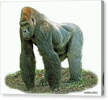 Ape Canvas Print - Lowland Silverback Gorilla by Larry Linton