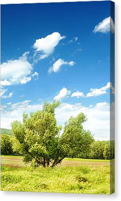 Lush Field Canvas Print by HD Connelly