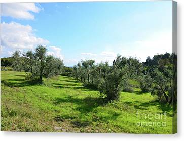 Lush Landscape In Tuscany Italy Canvas Print
